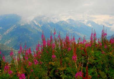 Alpage de Bovine